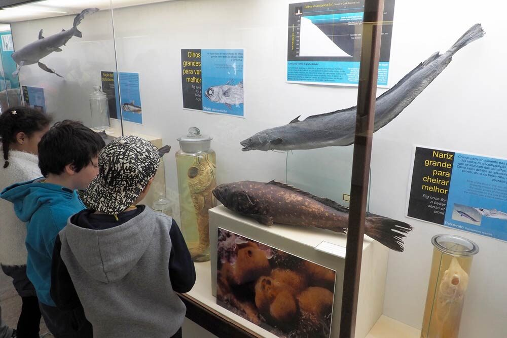 Museu Oceanográfico do Portinho da Arrábida